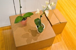 MOVING BOX WITH FLOWERS PIC